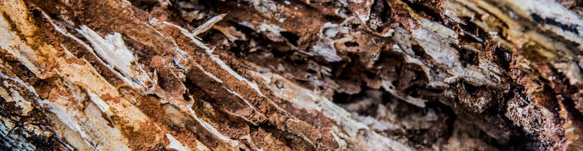 Africa's tree textures